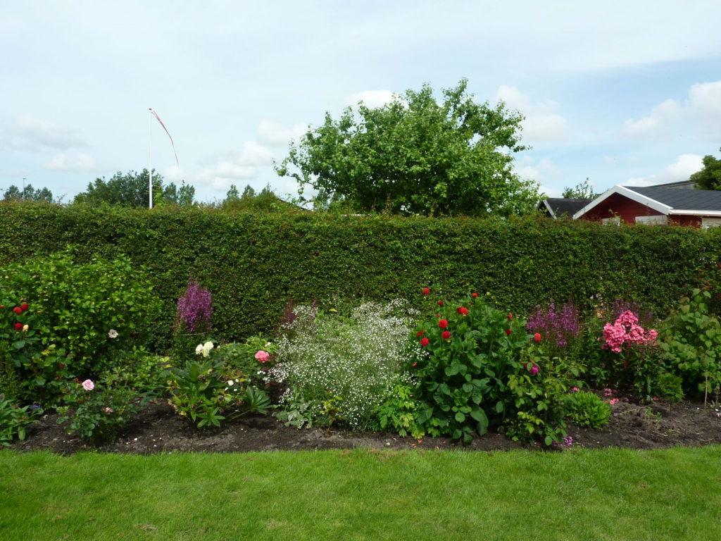 緑豊かな家の庭風景